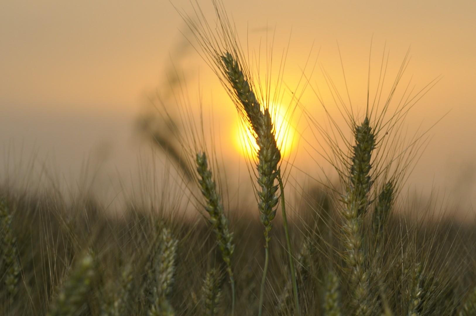 טהרת השבת והמעשרות – פרשת ראה