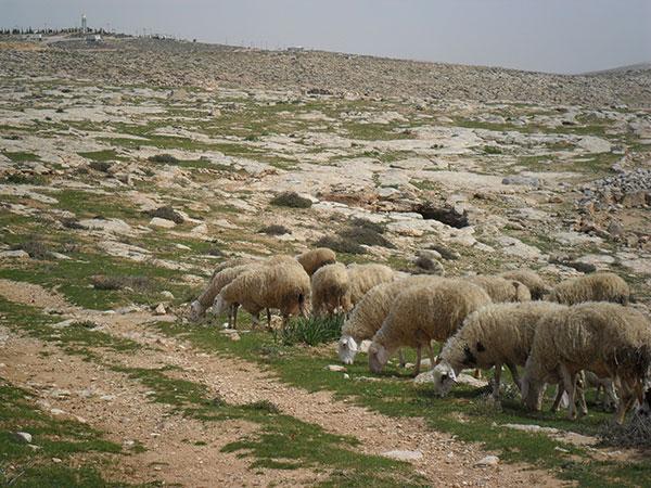 גאולת ישראל לפרשת דברים